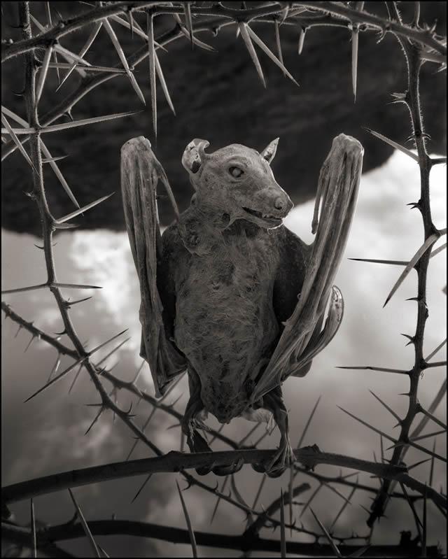 lago que convierte animales en estatuas natron nick brandt 03