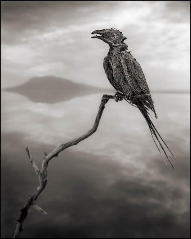 lago que convierte animales en estatuas natron nick brandt 05