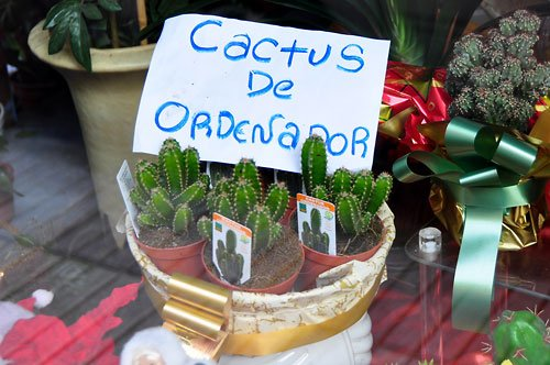 cactus y computadoras