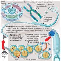 """Descubren que el """"ADN basura"""" en realidad era muy importante"""
