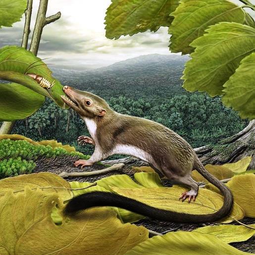 primer mamifero con placenta