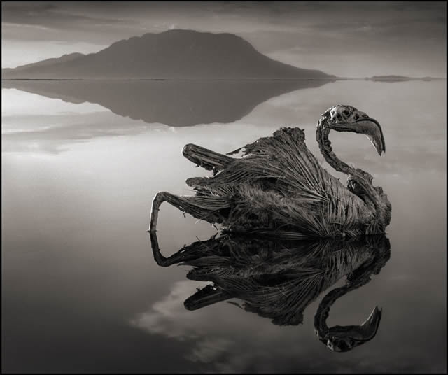 lago que convierte animales en estatuas natron nick brandt 01