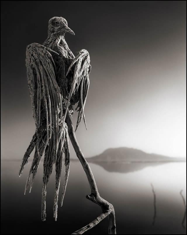 lago que convierte animales en estatuas natron nick brandt 04