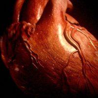 Se podran reparar corazones dañados con células madres en Europa