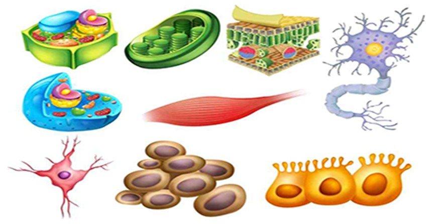 La teoría celular: Principio básico en la biología 1