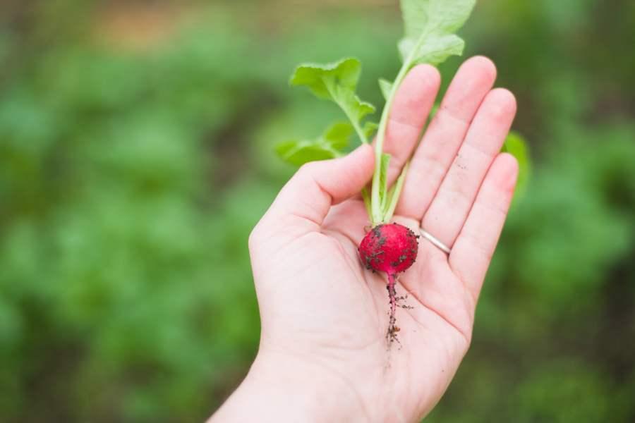 agricultura ramas de la biología
