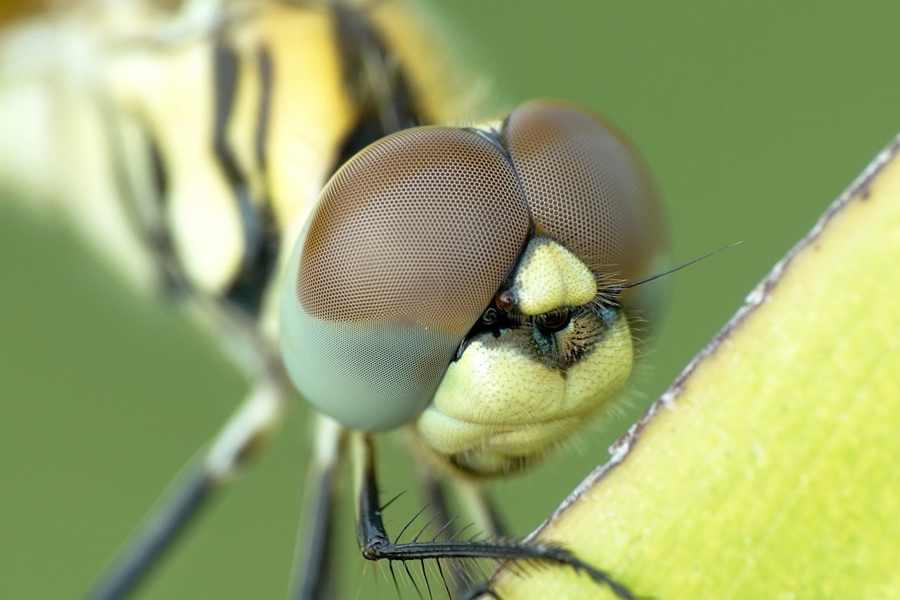insecto ramas de la biología