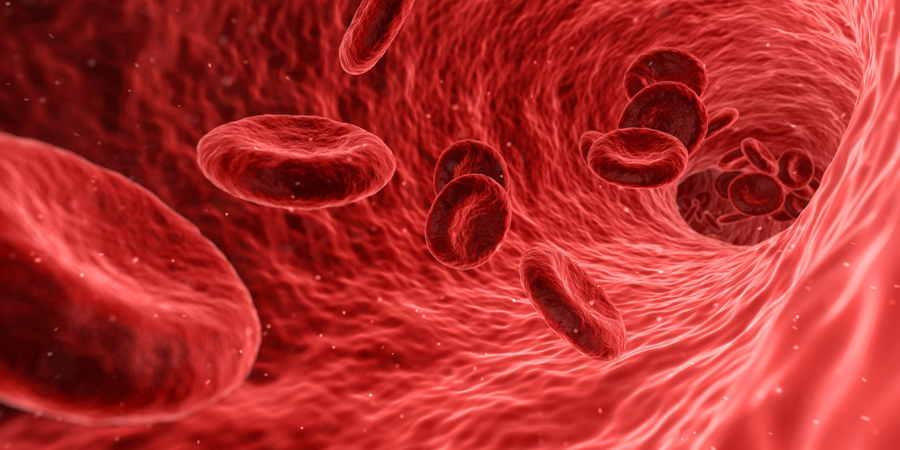 sangre ramas de la biología