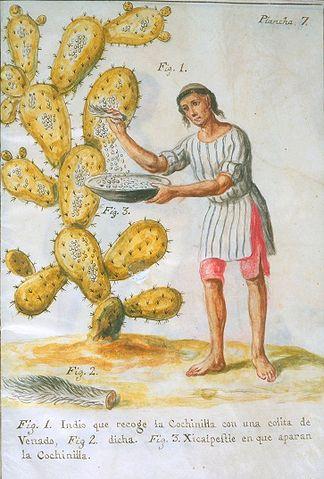 indígena recolectando cochinilla